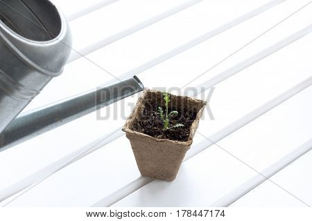 Iron lake with a young plant in a pot on a light table / care of seedlings