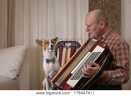 Young basenji dog and mature musician with accordion prepare to perform learning new song