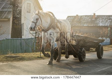 White horse with a cart early spring.
