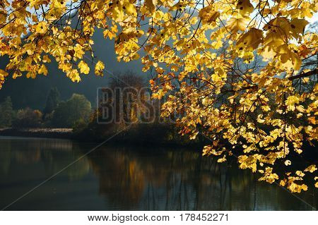 Swiss Lucelle Lake (Lac de Lucelle) in a golden frame of autumn leaves