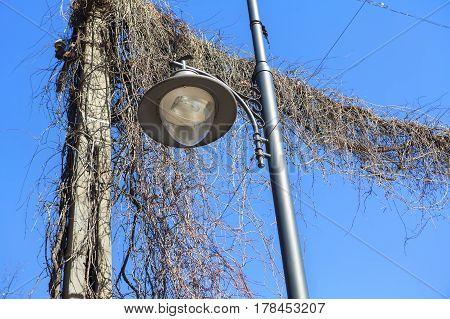 Stylish street lamp in plants against blue sky
