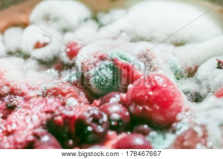 Fresh nice mold on berries like symbol of horror