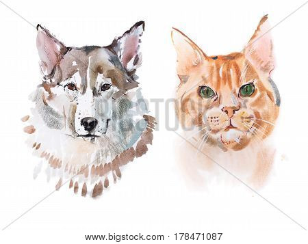 Watercolor painting, red-headed cat and dog aquarelle drawing