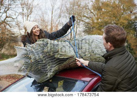 Young couple securing a Christmas tree to the roof of a car