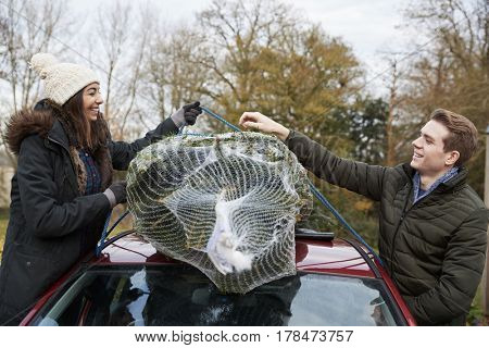Couple stand either side of car tying Christmas tree to roof
