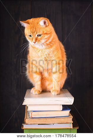 Cat sitting on top of a pile of old books on a dark background.