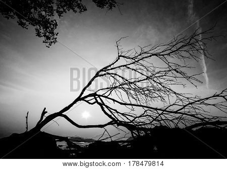 Tree silhouette with meaningful shape. Abstract black and white photo.