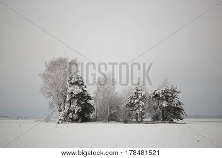 Lonely Snow-covered Trees In The Field. Mainly Cloudy