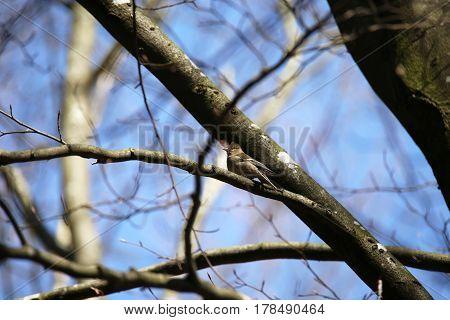 Songbird / A bird sits on a tree