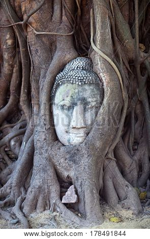 Ancient Buddha's Head in Tree Roots in Wat Phra Mahathat in Ayutthaya Thailand