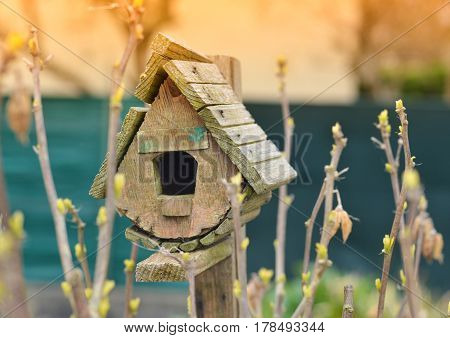 Bird house and the first spring gentle leaves buds and branches.