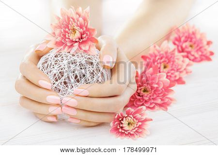 beautiful pink manicure with chrysanthemum flowers with a white ball of yarn .spa