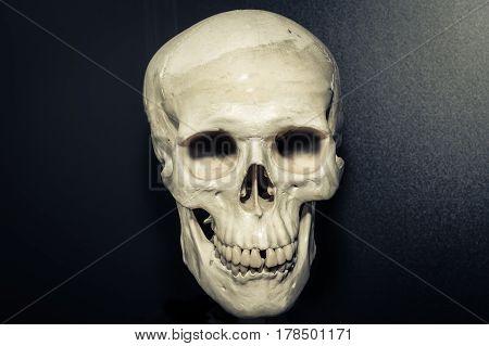 Human skull on dark grey background, danger concept