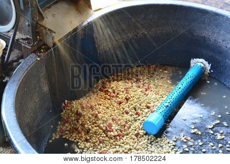 Pulping The Coffee Berry ** note select focus with shallow depth of field