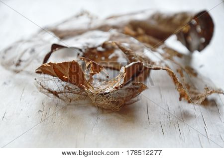 dry brown leaf decompose structure on wooden board