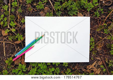White sheet of paper, pencils on the soil with green plants