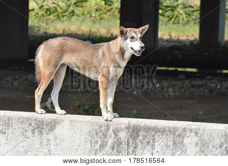 street dog standing on gray concrete barrier