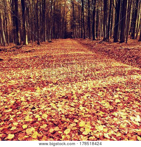 Path Leading Among The Beech Trees In Early Autumn Forest. Fresh Colors