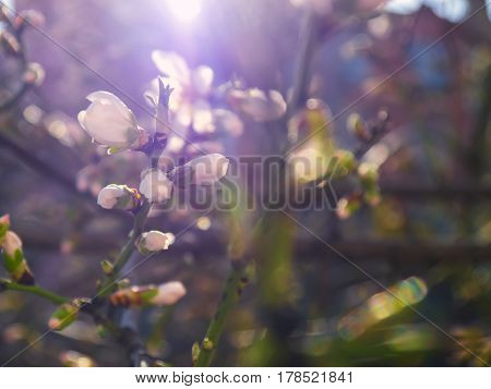 The beautifully blooming tree branches with flowers