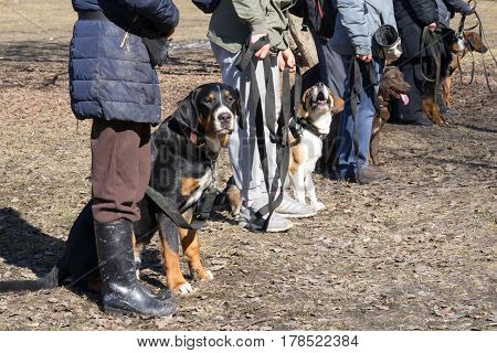 Dogs Sitting Near Their Owners During The Dog Obedience Outdoor Training Course