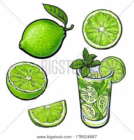 Set of whole, half, quarter lime and glass of lemonade with ice, sketch style vector illustration on white background. Hand drawn whole and cut lime and glass of lemonade with ice