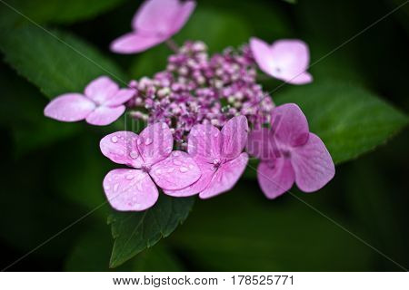pink flowers and green leaves, just plant
