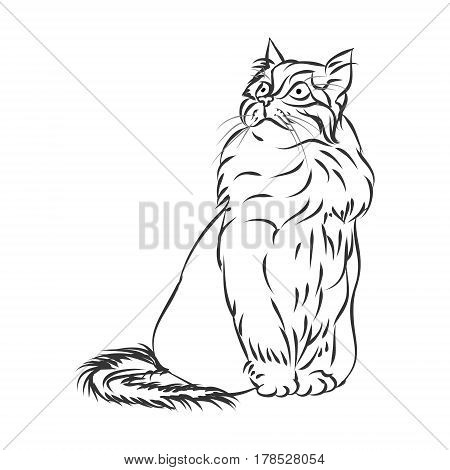 Fluffy cat outline on white background, vector