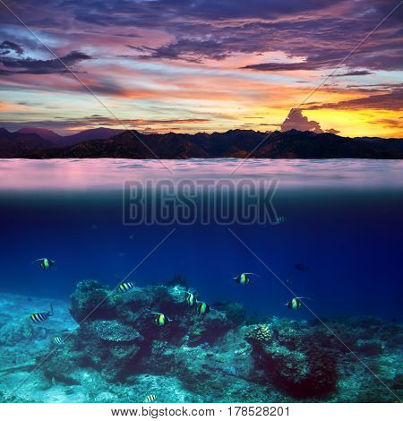 School Of Fish In The Tropical Ocean On Beautiful Sunset Splitted By Waterline