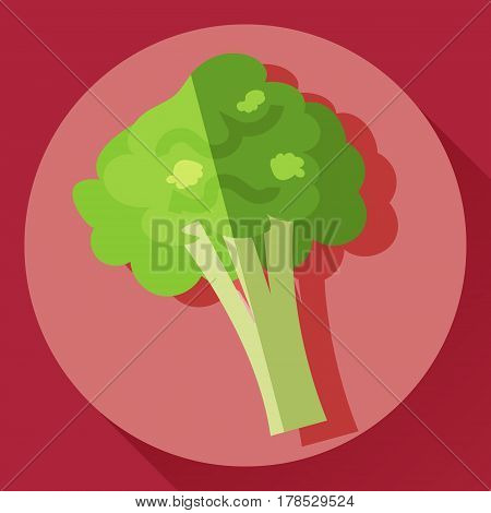 Vector flat cartoon style icon of broccoli cabbage
