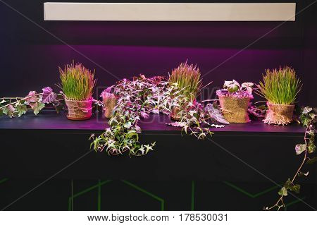 Grass green with flowers on the pedestal, backlight purple.