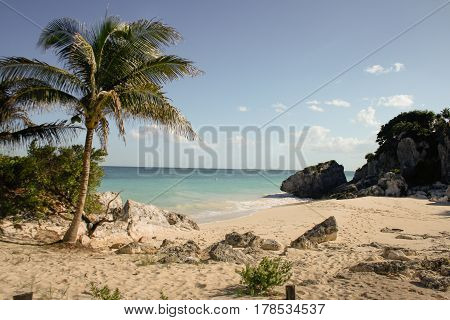 Beach landscape with palm in Yucatan, Mexico