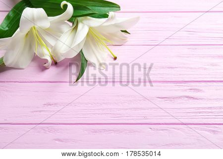 Beautiful white lily on color wooden background