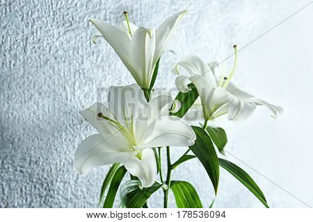 Beautiful white lilies on light background