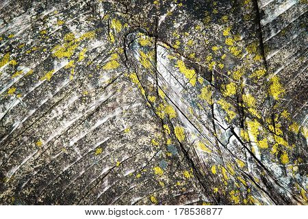 abstract background detail wooden plank overgrown with moss