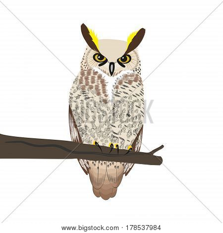 Owl sits on a tree branch isolated on white background.