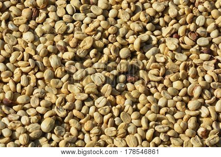 Define parchment coffee: dried but unhulled coffee beans ** note select focus with shallow depth of field