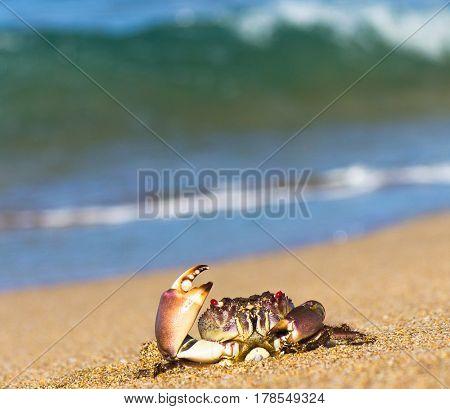 Funny Crab Seafood Posing