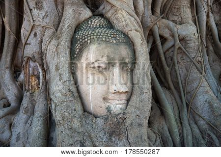The ancient head of Buddha is ingrown into the roots of a tree close up. Ruins of the ancient temple of Ayutthaya Wat, Thailand