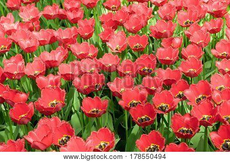 Multiple Blossoms Flower Pattern