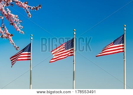 Cherry blossom abd flags of the United States waving over blue sky in Washington DC