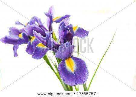 Spring Flower Frame Made From Iris