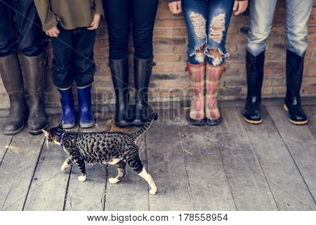 Group of people standing in a row with a cat and copy space on wooden floor