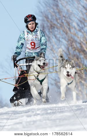 PETROPAVLOVSK-KAMCHATSKY KAMCHATKA PENINSULA RUSSIA - FEBRUARY 23 2017: Kamchatka Kids Competitions Sled Dog Race Dyulin (Beringia). Runs dog sled young Kamchatka musher Elizabeth Grishina.