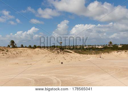 Sand dunes and palm trees of Mangue Seco Jandaíra Bahia Brazil