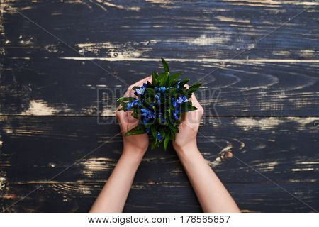 Female hands holding a flowerpot with blue snowdrops, flat lay picture. Place for a copy space. Hands holding a flowerpot