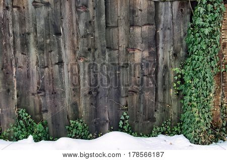 Closeup of dark wooden planks of fence with snow and green plants texture background