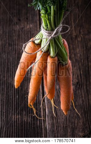 Fresh Young Bunch Of Carrots And Leaves