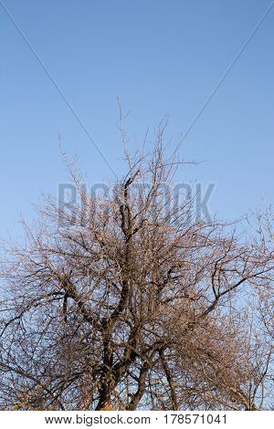 bare tree branches against the sky . Photo texture