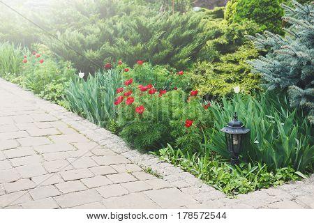 Red tulips near garden tile path in summer park. Landscape design of garden. Flowerbed and evergreen bushes.