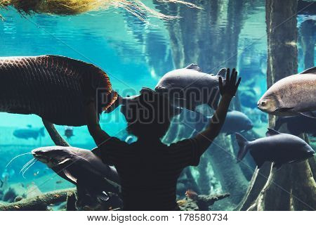 Outline person with raised hands. View from back tourist traveler on background blue sea aquarium. Person in oceanarium museum Barcelona and photographer pictures fish smartphone mockup